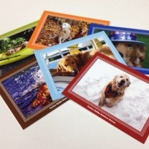 exclusive-ygrr-assorted-cards-3