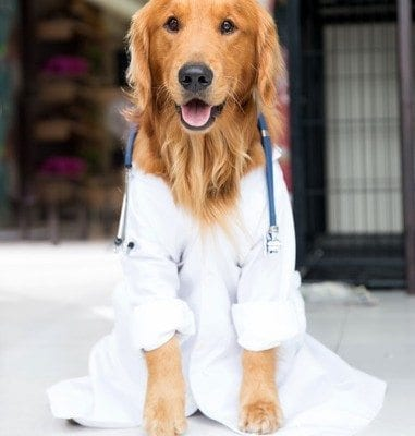 Beautiful cute dog dressed as a vet