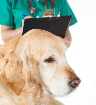 Veterinary issuing a report about a dog in the office