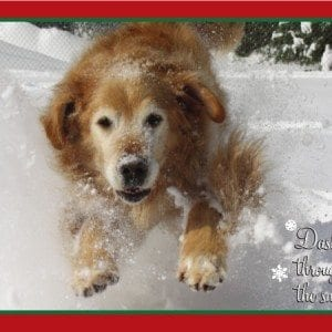 ygrr-exclusive-2012-christmas-cards-3