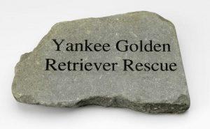 Store Yankee Golden Retriever Rescue Inc