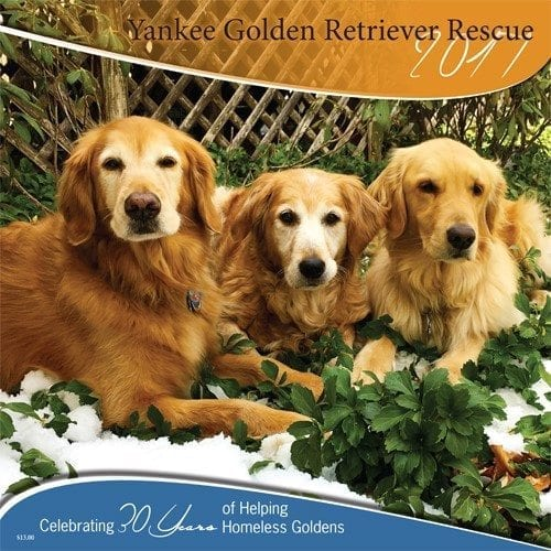 Home - Yankee Golden Retriever Rescue, Inc.Yankee Golden ...
