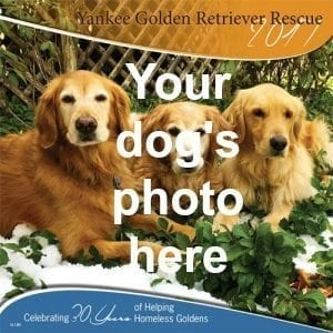 February 2020 Calendar With Dog Submit your 2020 YGRR calendar photos   Yankee Golden Retriever