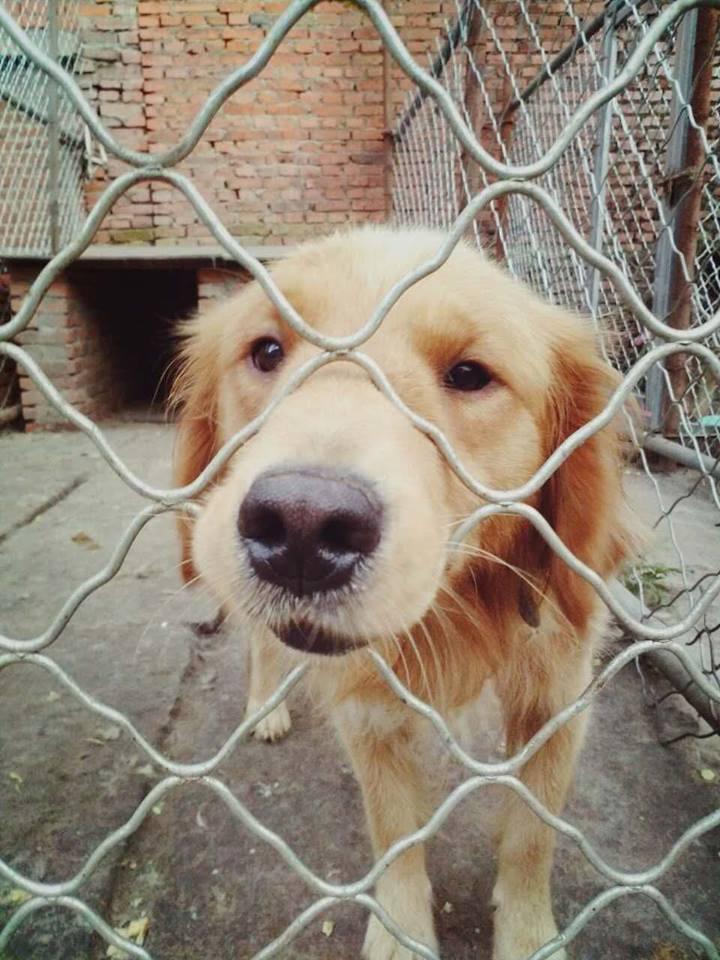 Dog Rescue Non Profit Organization