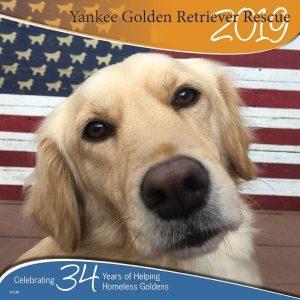 Home Yankee Golden Retriever Rescue Inc