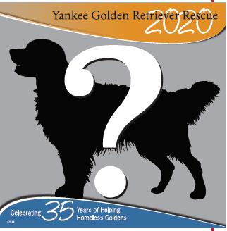 Yankee Calendar 2020 2020 Calendar Photos   Yankee Golden Retriever Rescue, Inc.