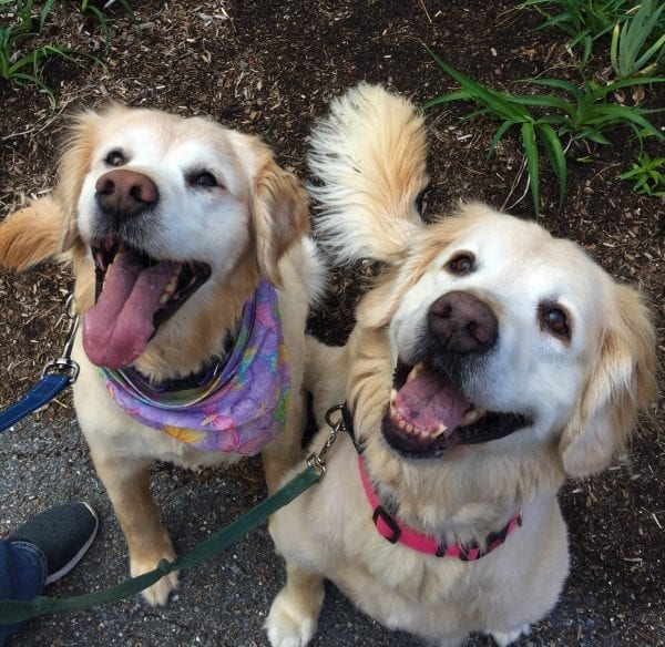 SHELLEY & SANDY [ADOPTED!]