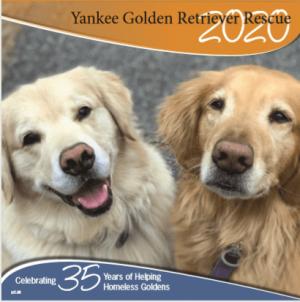 Home - Yankee Golden Retriever Rescue, Inc